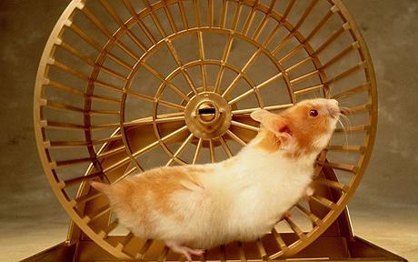 http://avcomics.files.wordpress.com/2009/09/hamster.jpg